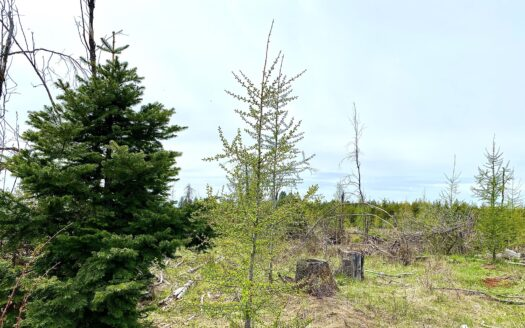photo for a land for sale listing for Acreages for sale in North Central Idaho with no CCR's