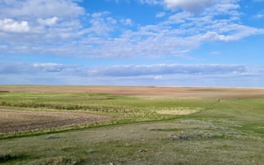 photo for a land for sale listing for Stagecoach Road Organic Wheat Farm with Lease Back Potential
