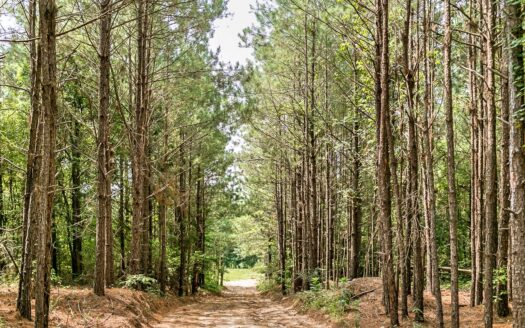 photo for a land for sale listing for 170 Acres Timber Recreational Hunting Land for Sale North LA