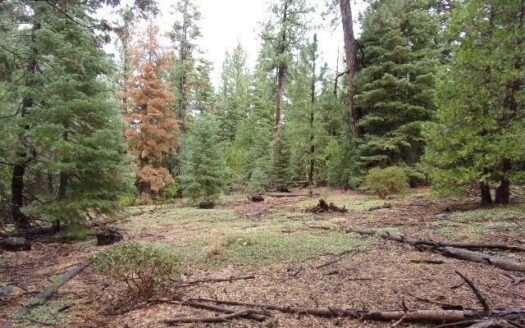 photo for a land for sale listing for 1.8 Acres Off the Grid in Northern CA
