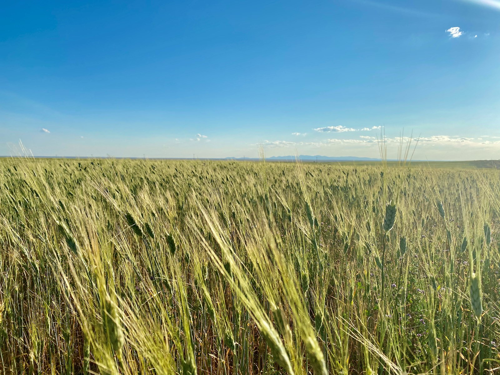 ranches for sale listing image for 1034+/- Acres Organic Farm Ground South Phillips County